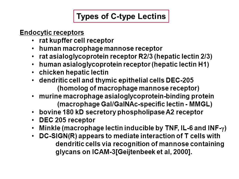 Endocytic receptors rat kupffer cell receptor human macrophage mannose receptor rat asialoglycoprotein receptor R2/3 (hepatic lectin 2/3) human asialoglycoprotein receptor (hepatic lectin H1) chicken hepatic lectin dendritic cell and thymic epithelial cells DEC-205 (homolog of macrophage mannose receptor) murine macrophage asialoglycoprotein-binding protein (macrophage Gal/GalNAc-specific lectin - MMGL) bovine 180 kD secretory phospholipase A2 receptor DEC 205 receptor Minkle (macrophage lectin inducible by TNF, IL-6 and INF-  ) DC-SIGN(R) appears to mediate interaction of T cells with dendritic cells via recognition of mannose containing glycans on ICAM-3[Geijtenbeek et al, 2000].