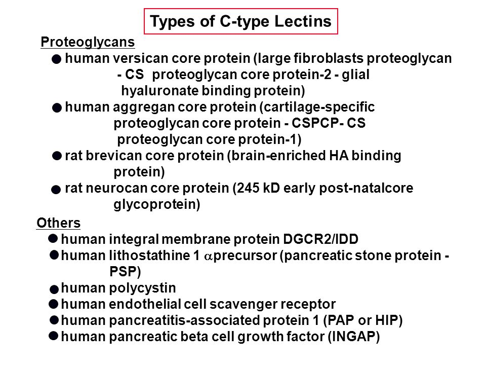 Others human integral membrane protein DGCR2/IDD human lithostathine 1  precursor (pancreatic stone protein - PSP) human polycystin human endothelial cell scavenger receptor human pancreatitis-associated protein 1 (PAP or HIP) human pancreatic beta cell growth factor (INGAP) Proteoglycans human versican core protein (large fibroblasts proteoglycan - CS proteoglycan core protein-2 - glial hyaluronate binding protein) human aggregan core protein (cartilage-specific proteoglycan core protein - CSPCP- CS proteoglycan core protein-1) rat brevican core protein (brain-enriched HA binding protein) rat neurocan core protein (245 kD early post-natalcore glycoprotein) Types of C-type Lectins