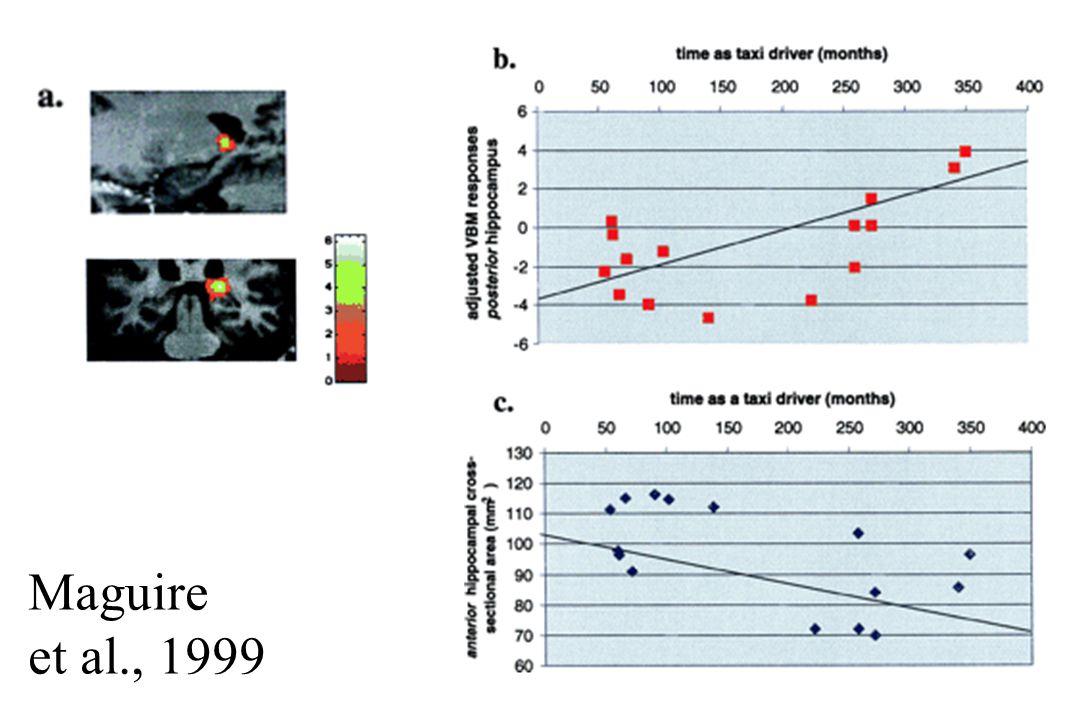 Mc Gill Maguire et al., 1999