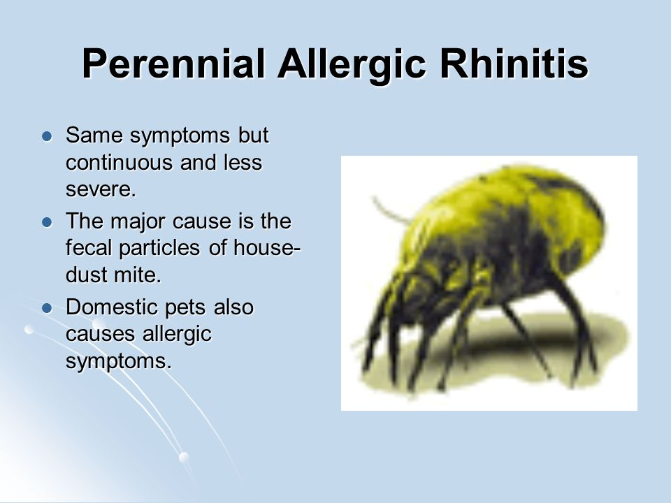 Perennial Allergic Rhinitis Same symptoms but continuous and less severe.