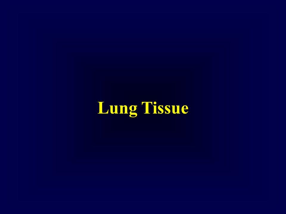 Lung Tissue
