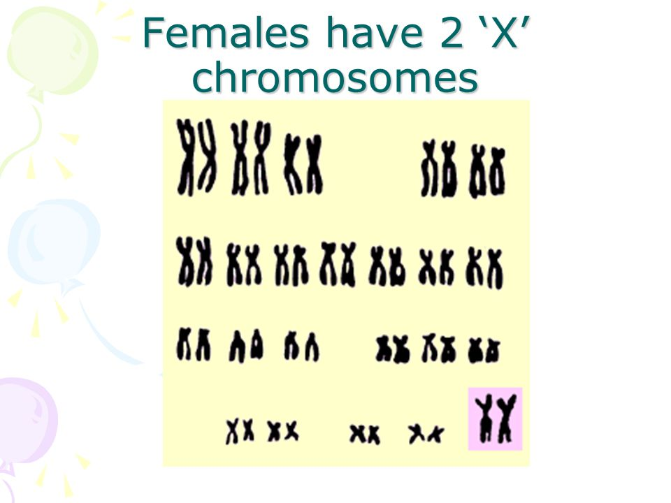 Females have 2 'X' chromosomes