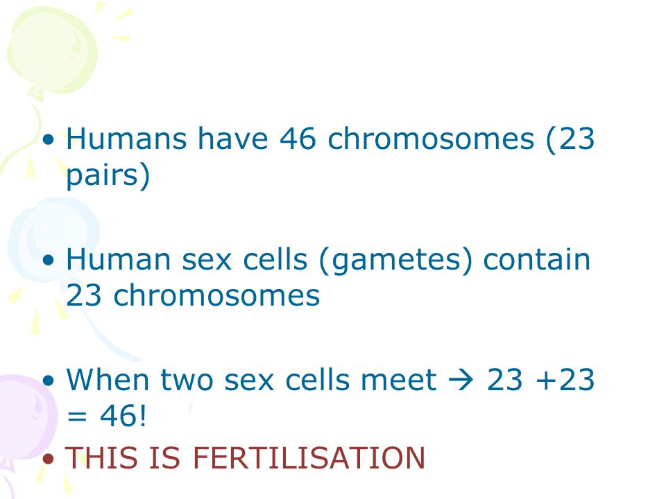 Humans have 46 chromosomes (23 pairs) Human sex cells (gametes) contain 23 chromosomes When two sex cells meet  23 +23 = 46.