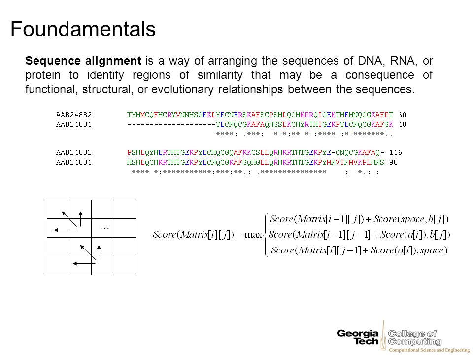 Foundamentals In 1980s Jeffrey Palmer studied evolution of plant organelles by comparing mitochondrial genomes of the cabbage and turnip, 99% similarity between genes, These surprisingly identical gene sequences differed in gene order, This study helped pave the way to analyzing genome rearrangements in molecular evolution.