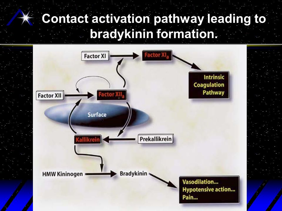 Contact activation pathway leading to bradykinin formation.
