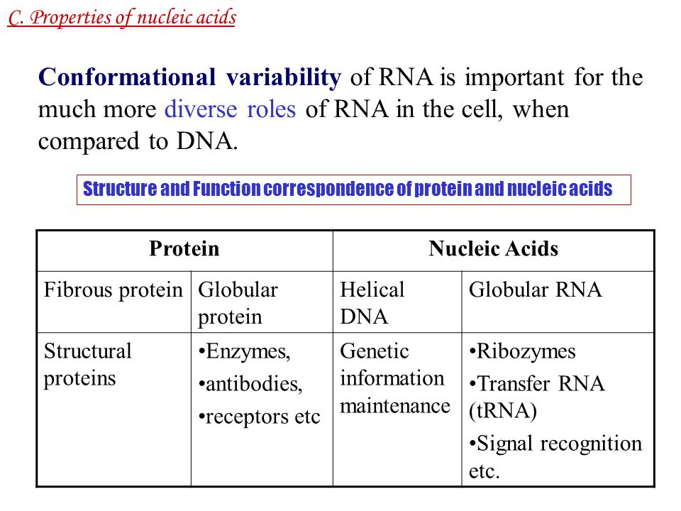 C1 Nucleic Acid Structure : Modified Nucleic Acids Modifications correspond to numbers of specific roles.