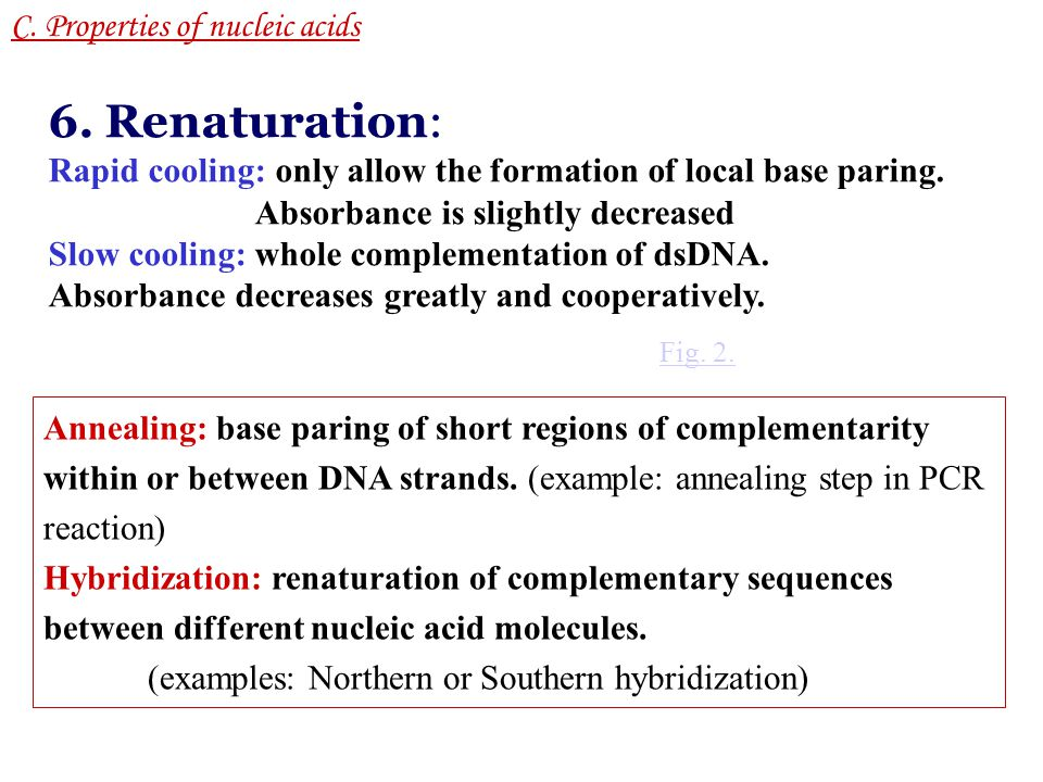 DNA Supercoiling C.