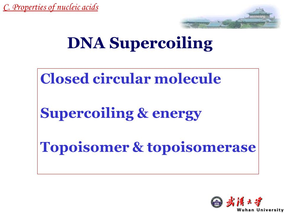 1.Almost all DNA molecules in cells can be considered as circular, and are on average negatively supercoiled.