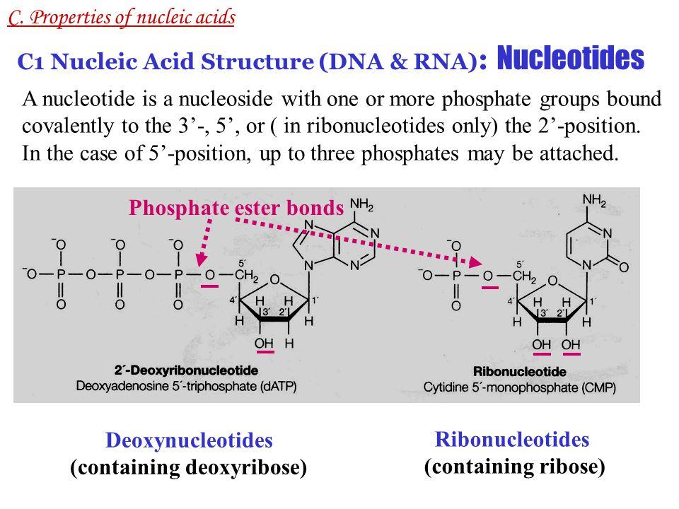 BASESNUCLEOSIDESNUCLEOTIDES Adenine (A) AdenosineAdenosine 5'-triphosphate (ATP) DeoxyadenosineDeoxyadenosine 5'-triphosphate (dATP) Guanine (G) GuanosineGuanosine 5'-triphosphate (GTP) DeoxyguanosineDeoxy-guanosine 5'-triphosphate (dGTP) Cytosine (C) CytidineCytidine 5'-triphosphate (CTP) DeoxycytidineDeoxy-cytidine 5'-triphosphate (dCTP) Uracil (U) UridineUridine 5'-triphosphate (UTP) Thymine (T) Thymidine/ Deoxythymidie Thymidine/deoxythymidie 5'-triphosphate (dTTP) C.