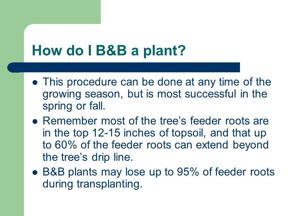 How do I B&B a plant.