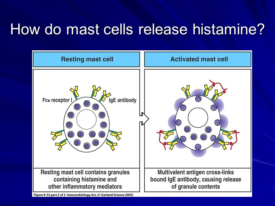 How do mast cells release histamine