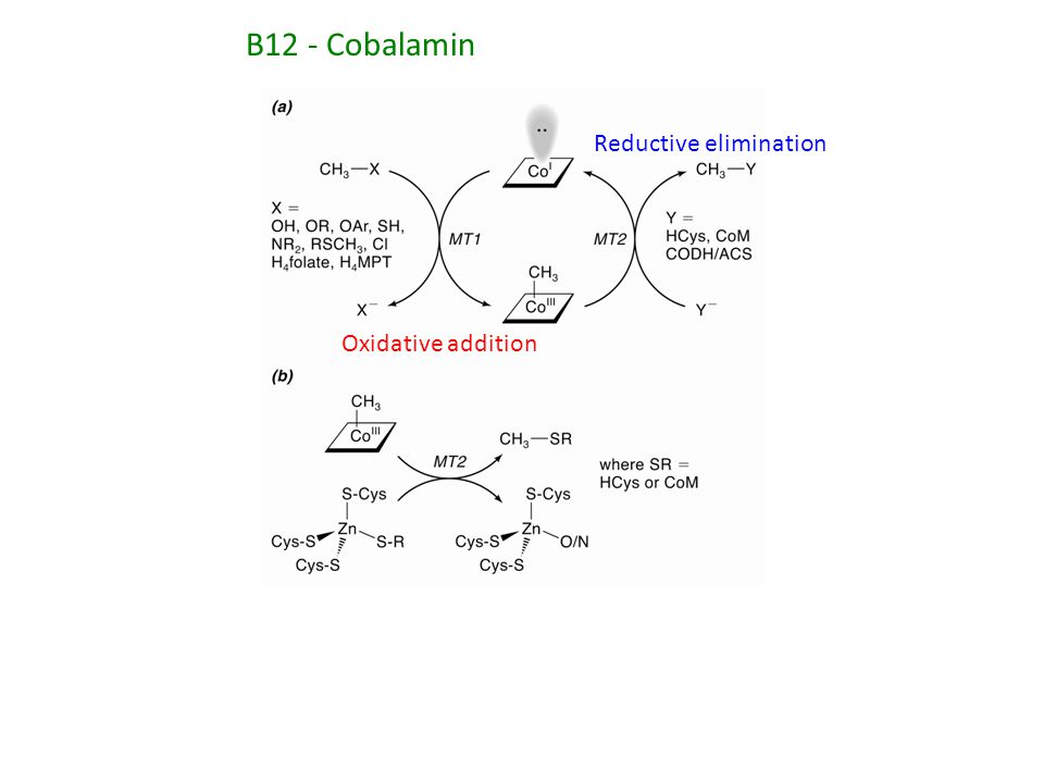 Oxidative addition Reductive elimination B12 - Cobalamin