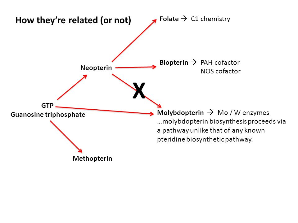 GTP Guanosine triphosphate Neopterin Biopterin  PAH cofactor NOS cofactor Methopterin Molybdopterin  Mo / W enzymes …molybdopterin biosynthesis proceeds via a pathway unlike that of any known pteridine biosynthetic pathway.