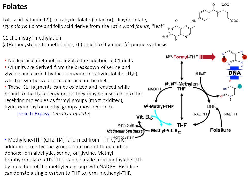 Folates Folic acid (vitamin B9), tetrahydrofolate (cofactor), dihydrofolate, Etymology: Folate and folic acid derive from the Latin word folium, leaf C1 chemistry: methylation (a)Homocysteine to methionine; (b) uracil to thymine; (c) purine synthesis Nucleic acid metabolism involve the addition of C1 units.