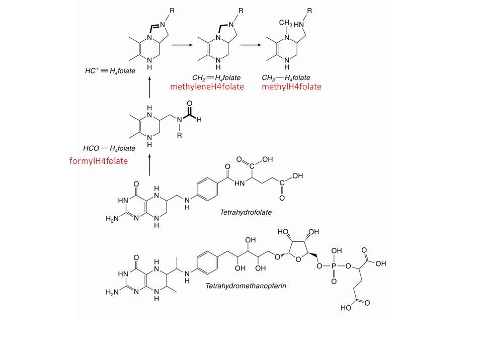 methyleneH4folatemethylH4folate formylH4folate