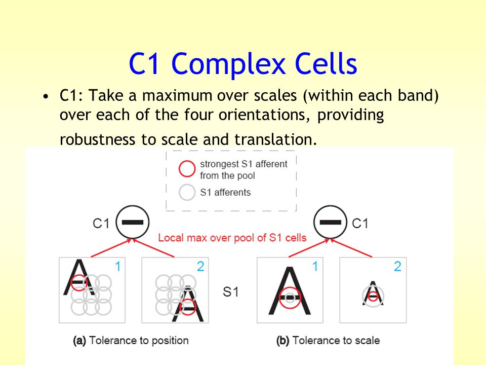 C1 Complex Cells C1: Take a maximum over scales (within each band) over each of the four orientations, providing robustness to scale and translation.