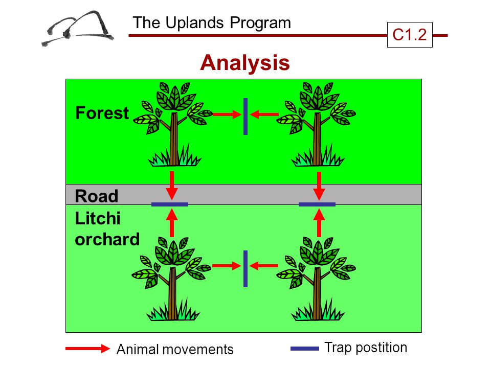 The Uplands Program C1.2 Analysis Forest Road Litchi orchard Animal movements Trap postition
