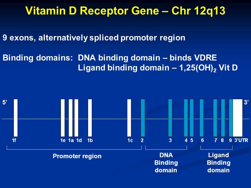 DNA Binding domain Ligand Binding domain Vitamin D Receptor Gene – Chr 12q13 9 exons, alternatively spliced promoter region Binding domains:DNA bindin