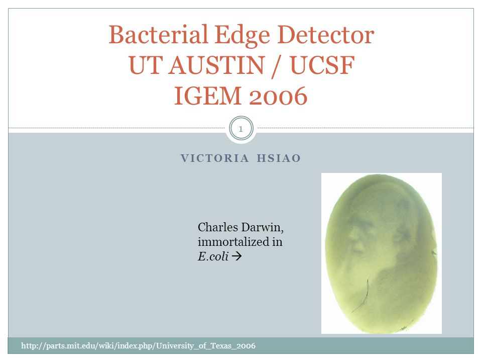Edge Detection Logic (continued) Images: http://parts.mit.edu/wiki/index.php/University_of_Texas_2006 12 Therefore, this case can only occur in light bacteria at the light/dark boundary, and the E.coli can detect edges..