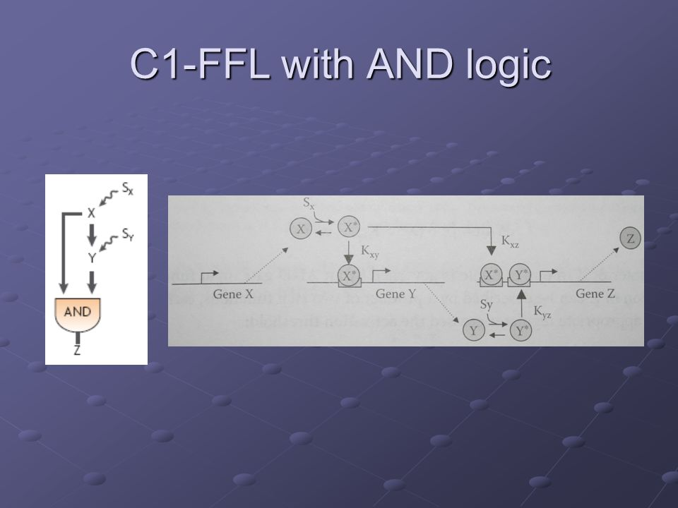 C1-FFL with AND logic