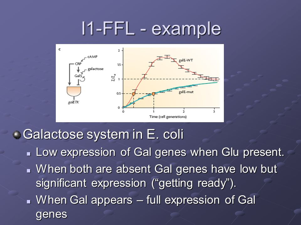 I1-FFL - example Galactose system in E. coli Low expression of Gal genes when Glu present. When both are absent Gal genes have low but significant exp