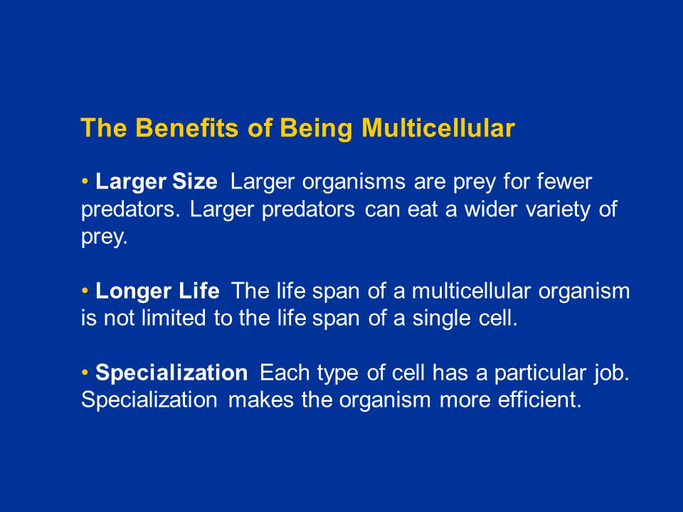 The Benefits of Being Multicellular Larger Size Larger organisms are prey for fewer predators. Larger predators can eat a wider variety of prey. Longe