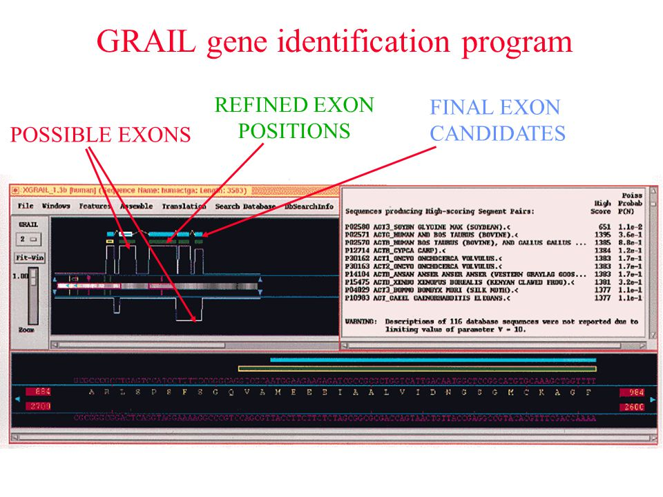 GRAIL gene identification program POSSIBLE EXONS REFINED EXON POSITIONS FINAL EXON CANDIDATES