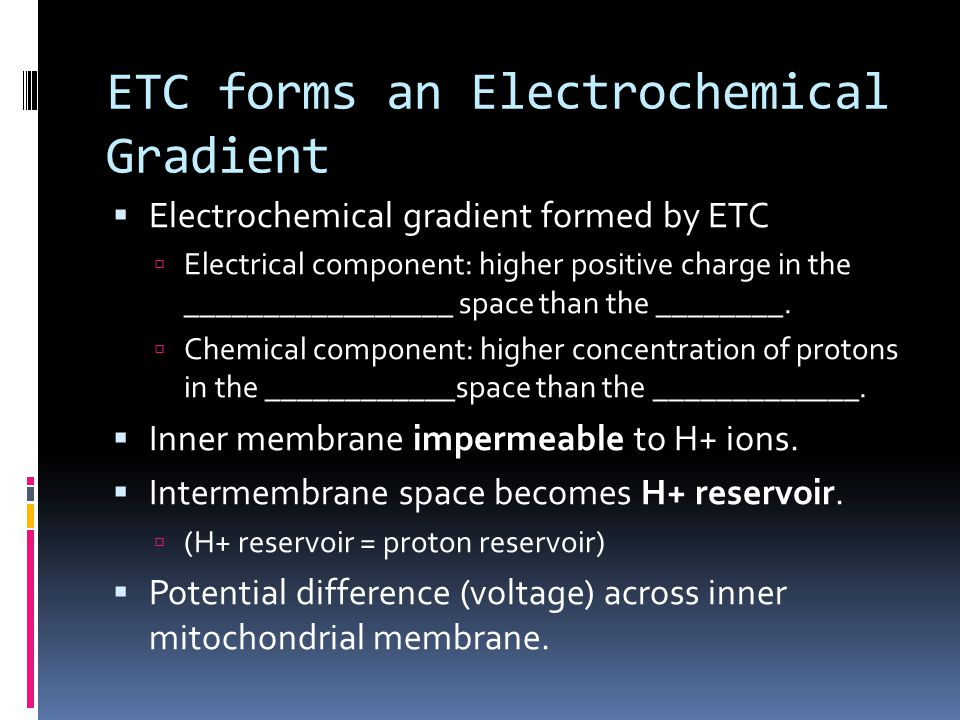 ETC forms an Electrochemical Gradient  Electrochemical gradient formed by ETC  Electrical component: higher positive charge in the _________________ space than the ________.