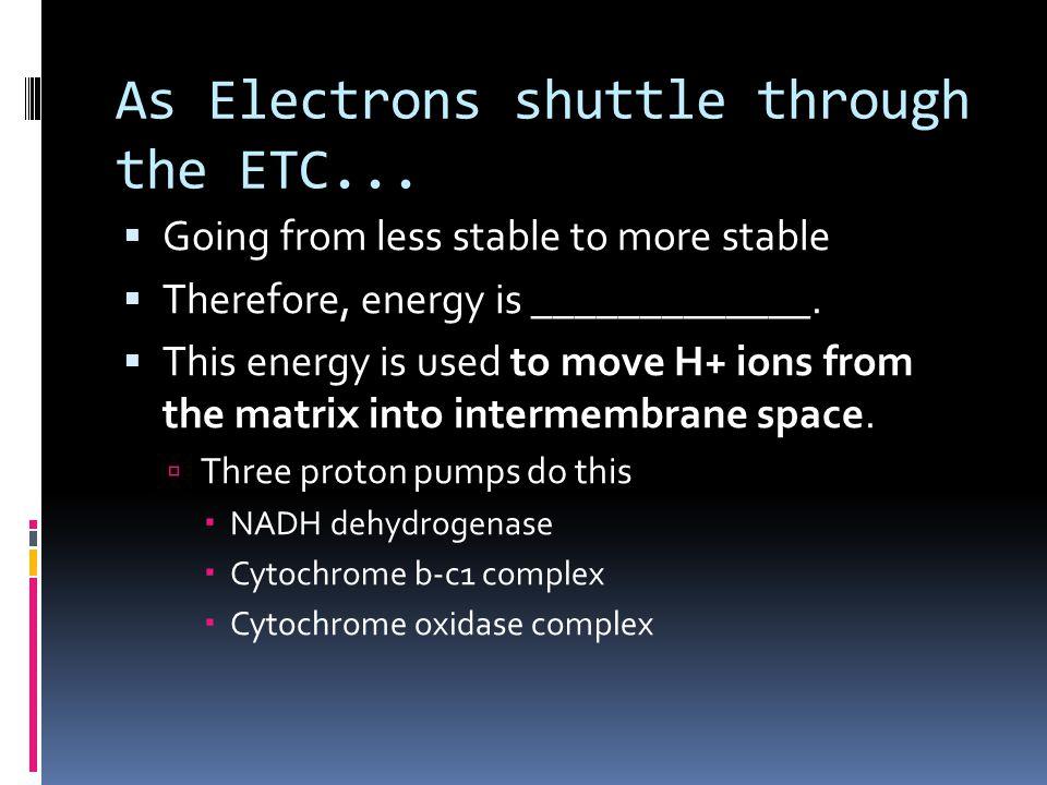 As Electrons shuttle through the ETC...