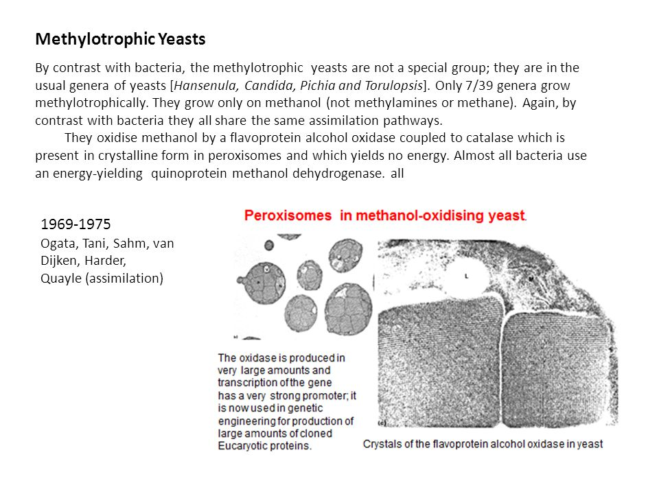 Methylotrophic Yeasts By contrast with bacteria, the methylotrophic yeasts are not a special group; they are in the usual genera of yeasts [Hansenula,