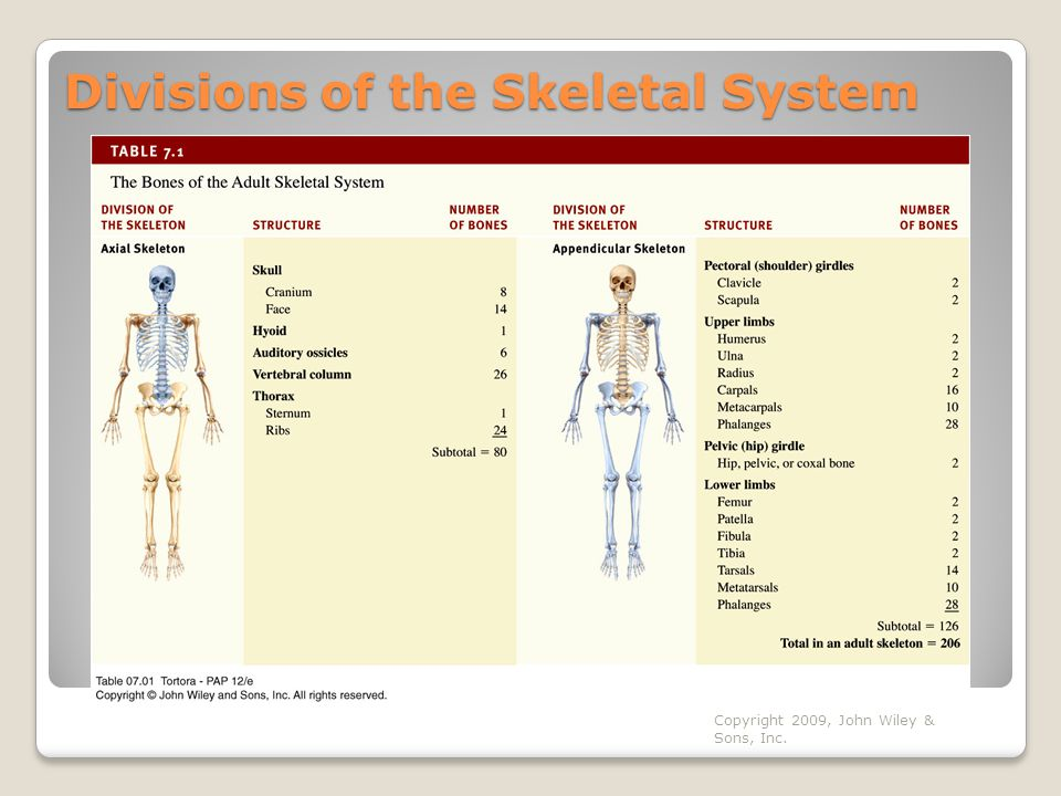 Copyright 2009, John Wiley & Sons, Inc. Divisions of the Skeletal System