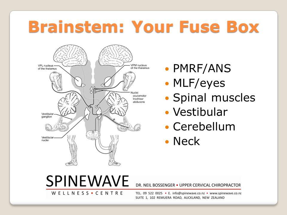 Brainstem: Your Fuse Box PMRF/ANS MLF/eyes Spinal muscles Vestibular Cerebellum Neck
