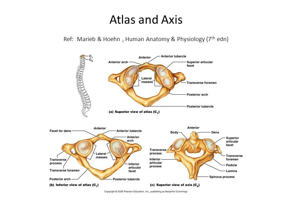 Atlas and Axis Ref: Marieb & Hoehn, Human Anatomy & Physiology (7 th edn)