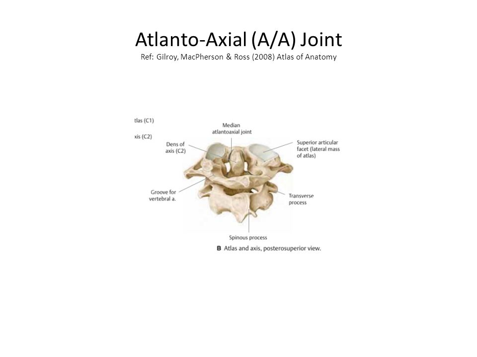 Atlanto-Axial (A/A) Joint Ref: Gilroy, MacPherson & Ross (2008) Atlas of Anatomy
