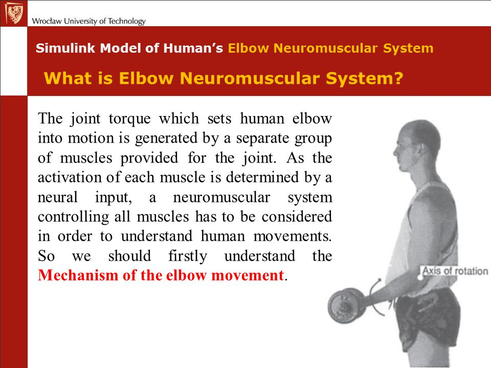 Simulink Model of Human's Elbow Neuromuscular System The joint torque which sets human elbow into motion is generated by a separate group of muscles p