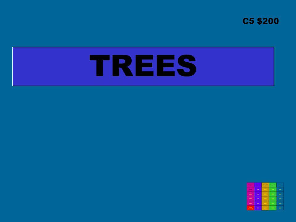 C5 $200 TREES