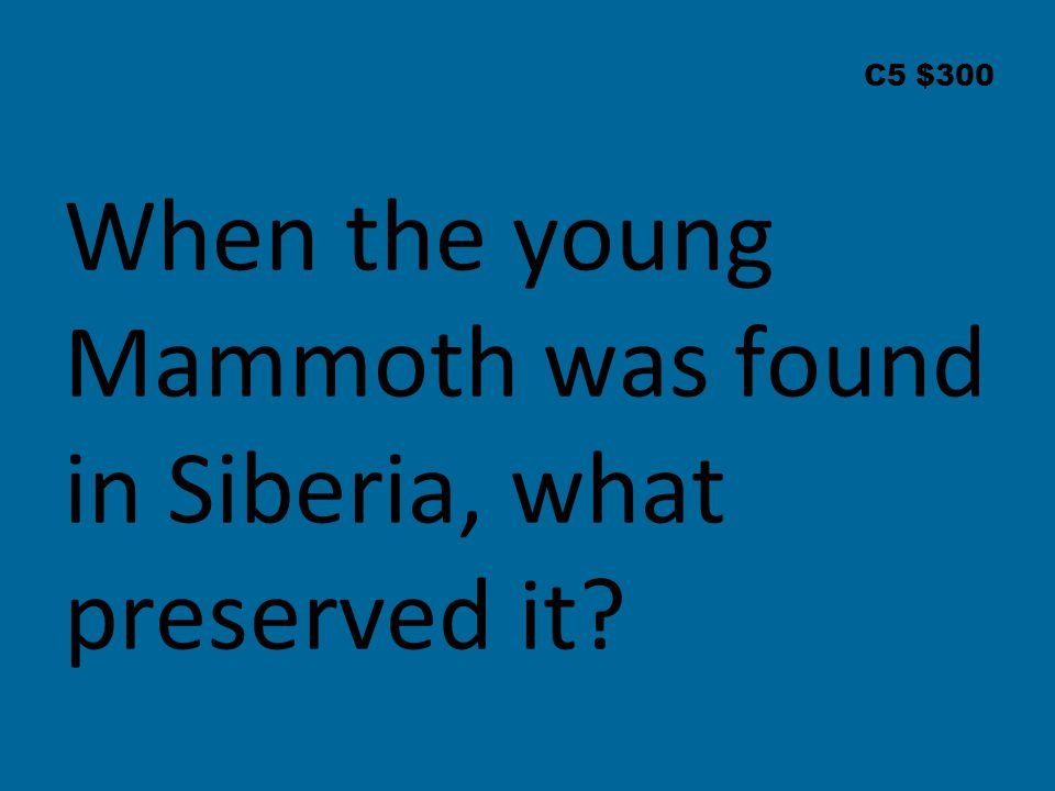 C5 $300 When the young Mammoth was found in Siberia, what preserved it?