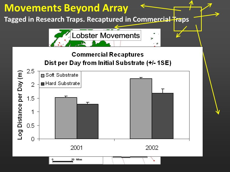 Movements Beyond Array Tagged in Research Traps. Recaptured in Commercial Traps