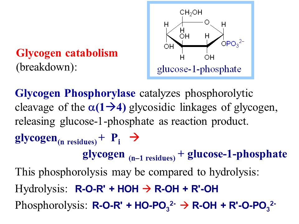 Glycogen Phosphorylase catalyzes phosphorolytic cleavage of the  (1  4) glycosidic linkages of glycogen, releasing glucose-1-phosphate as reaction product.