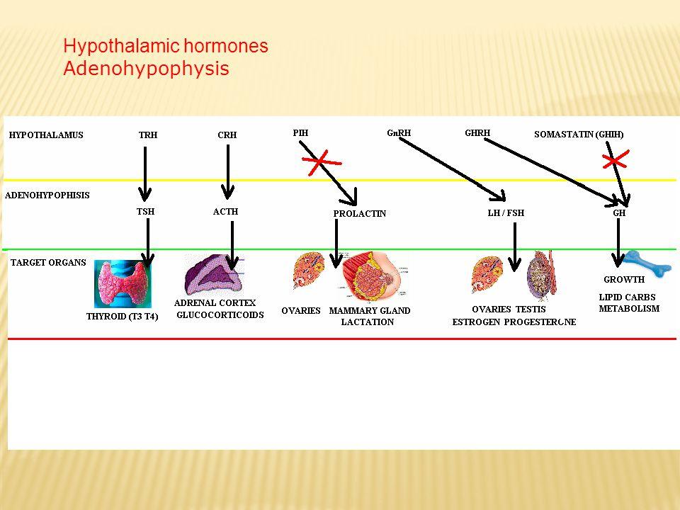 Hypothalamic hormones Adenohypophysis