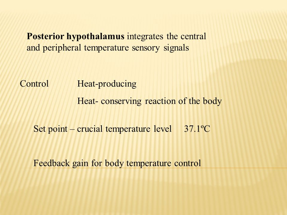 Posterior hypothalamus integrates the central and peripheral temperature sensory signals Control Heat-producing Heat- conserving reaction of the body Set point – crucial temperature level 37.1ºC Feedback gain for body temperature control
