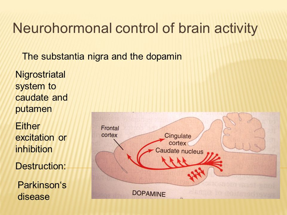 Neurohormonal control of brain activity The substantia nigra and the dopamin Ventral tegmental nucleus to the frontal lobe, ventral striatum, amygdala, other limbic structures Excessive activity: schizophrenia