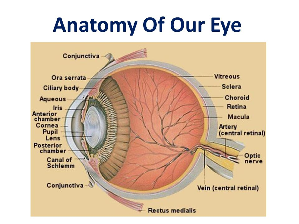 Anatomy Of Our Eye