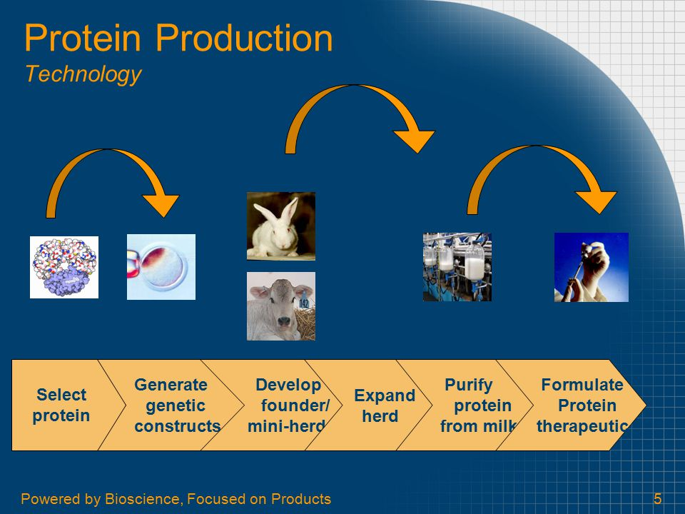 Powered by Bioscience, Focused on Products5 Protein Production Technology Generate genetic constructs Develop founder/ mini-herd Expand herd Select pr