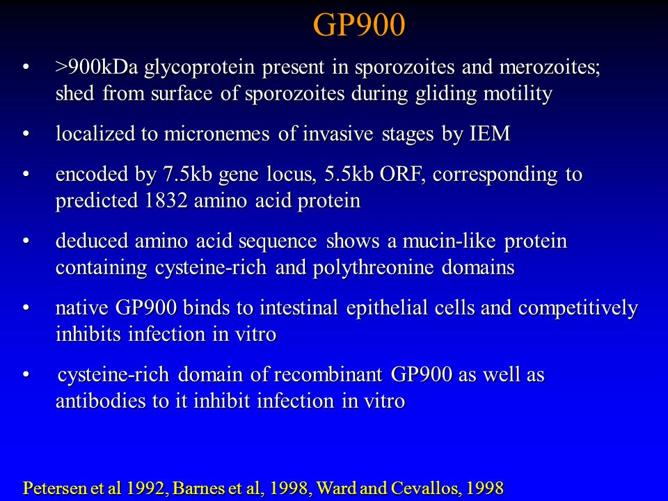 GP900 >900kDa glycoprotein present in sporozoites and merozoites; shed from surface of sporozoites during gliding motility >900kDa glycoprotein present in sporozoites and merozoites; shed from surface of sporozoites during gliding motility localized to micronemes of invasive stages by IEM localized to micronemes of invasive stages by IEM encoded by 7.5kb gene locus, 5.5kb ORF, corresponding to predicted 1832 amino acid proteinencoded by 7.5kb gene locus, 5.5kb ORF, corresponding to predicted 1832 amino acid protein deduced amino acid sequence shows a mucin-like protein containing cysteine-rich and polythreonine domains deduced amino acid sequence shows a mucin-like protein containing cysteine-rich and polythreonine domains native GP900 binds to intestinal epithelial cells and competitively inhibits infection in vitro native GP900 binds to intestinal epithelial cells and competitively inhibits infection in vitro cysteine-rich domain of recombinant GP900 as well as antibodies to it inhibit infection in vitro cysteine-rich domain of recombinant GP900 as well as antibodies to it inhibit infection in vitro Petersen et al 1992, Barnes et al, 1998, Ward and Cevallos, 1998 Petersen et al 1992, Barnes et al, 1998, Ward and Cevallos, 1998