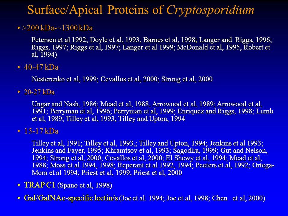 Surface/Apical Proteins of Cryptosporidium >200 kDa-~1300 kDa >200 kDa-~1300 kDa Petersen et al 1992; Doyle et al, 1993; Barnes et al, 1998; Langer and Riggs, 1996; Riggs, 1997; Riggs et al, 1997; Langer et al 1999; McDonald et al, 1995, Robert et al, 1994) 40-47 kDa 40-47 kDa Nesterenko et al, 1999; Cevallos et al, 2000; Strong et al, 2000 20-27 kDa 20-27 kDa Ungar and Nash, 1986; Mead et al, 1988, Arrowood et al, 1989; Arrowood et al, 1991; Perryman et al, 1996; Perryman et al, 1999; Enriquez and Riggs, 1998; Lumb et al, 1989; Tilley et al, 1993; Tilley and Upton, 1994 15-17 kDa 15-17 kDa Tilley et al, 1991; Tilley et al, 1993,; Tilley and Upton, 1994; Jenkins et al 1993; Jenkins and Fayer, 1995; Khramtsov et al, 1993; Sagodira, 1999; Gut and Nelson, 1994; Strong et al, 2000; Cevallos et al, 2000; El Shewy et al, 1994; Mead et al, 1988; Moss et al 1994, 1998; Reperant et al 1992, 1994; Peeters et al, 1992; Ortega- Mora et al 1994; Priest et al, 1999; Priest et al, 2000 TRAP C1 (Spano et al, 1998) TRAP C1 (Spano et al, 1998) Gal/GalNAc-specific lectin/s (Joe et al.