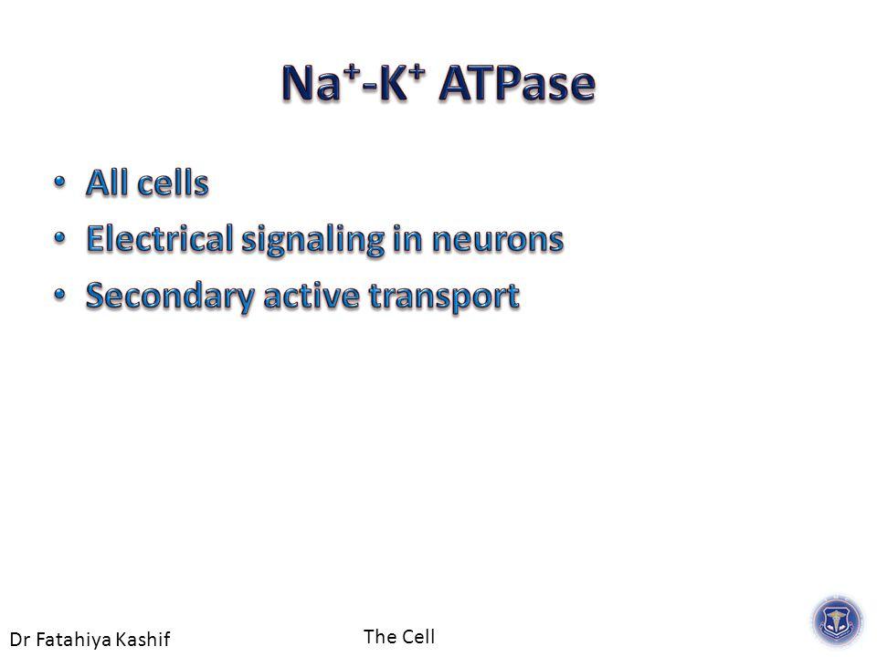 Dr Fatahiya Kashif The Cell