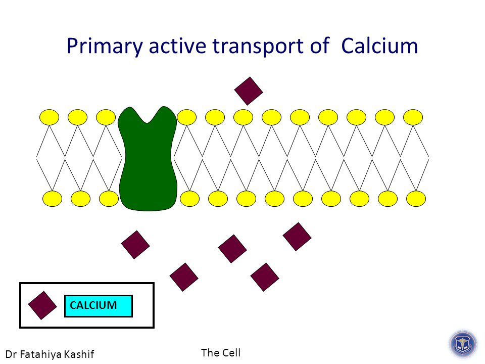 Dr Fatahiya Kashif The Cell CALCIUM Primary active transport of Calcium