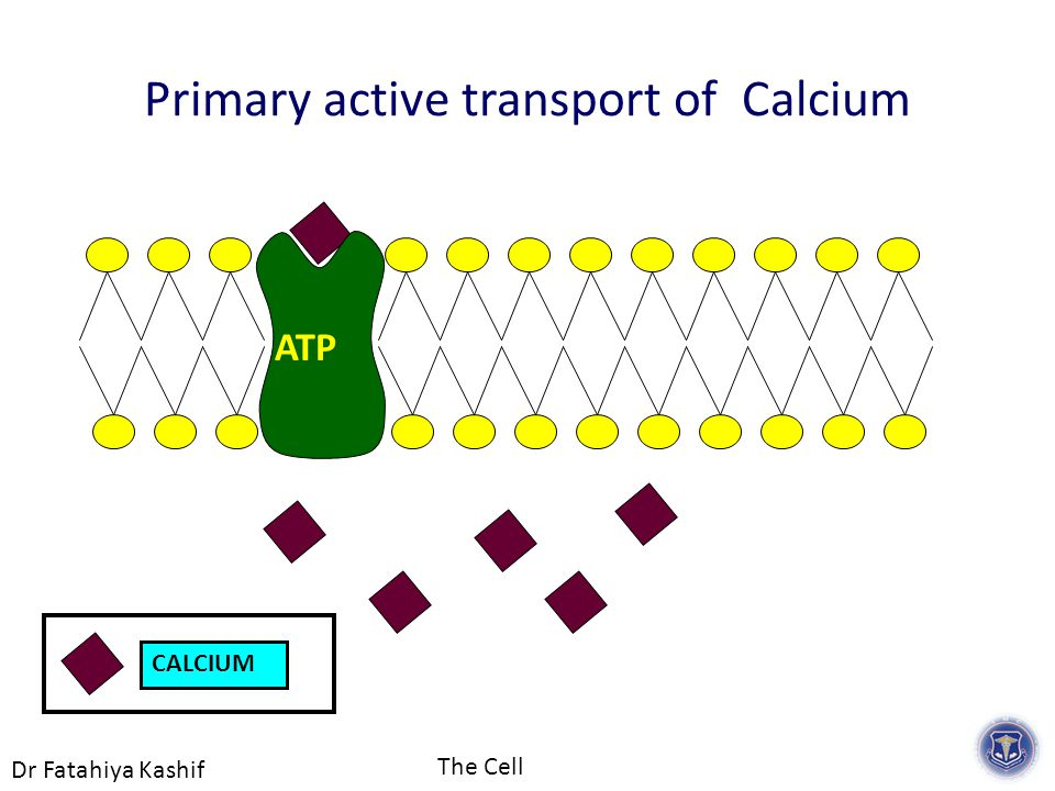 Dr Fatahiya Kashif The Cell CALCIUM Primary active transport of Calcium ATP