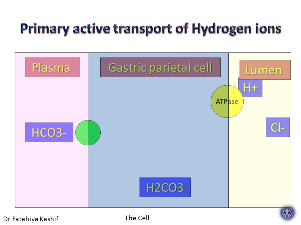 Dr Fatahiya Kashif The Cell H2CO3 H+ HCO3- Cl- Gastric parietal cell Plasma Lumen ATPase